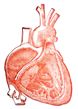 Heart from image pool
